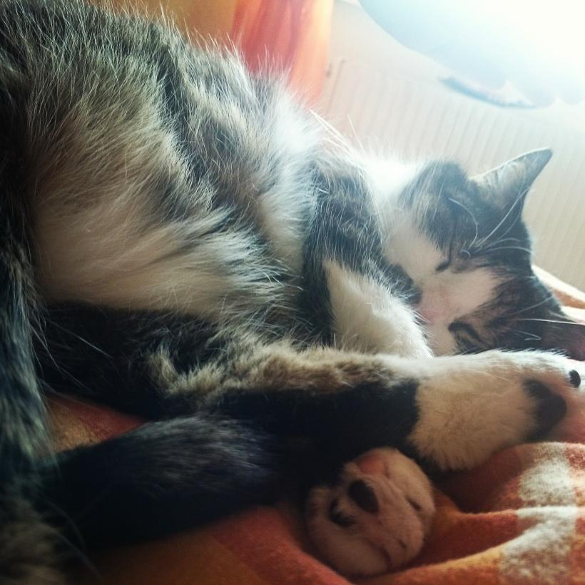Irgendwie fotografiere ich Katerchen immer nur, wenn er schläft. Er schläft viel.