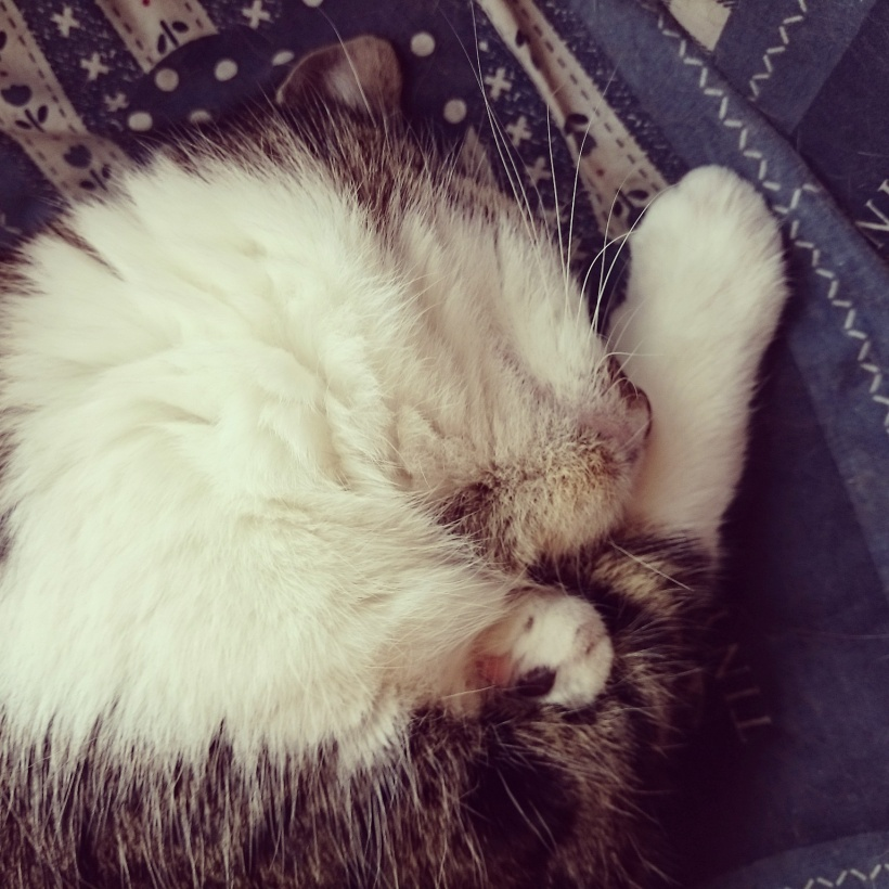 Katerchen hat gefühlt das ganze Wochenende geschlafen, und das immer in meiner Nähe. Sucht man die Katze, sollte man wohl einfach nach mir Ausschau halten :D =^.^=