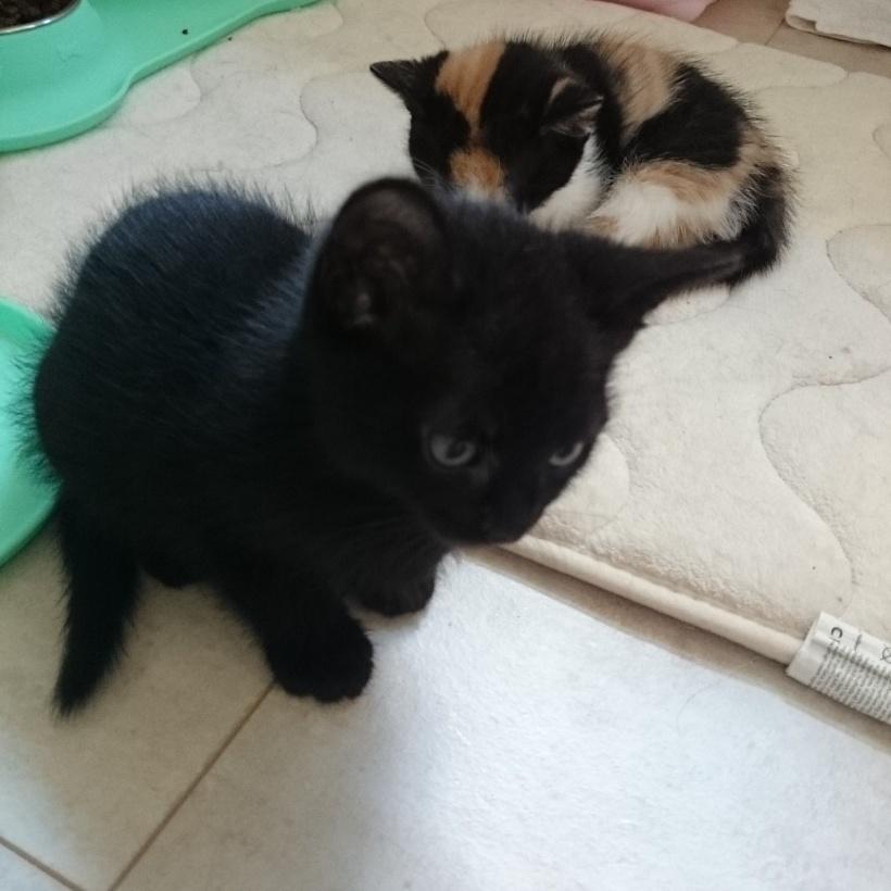Die Babykatzen von meiner Tante und meinem Onkel sind schon ziemlich groß und verspielt :)