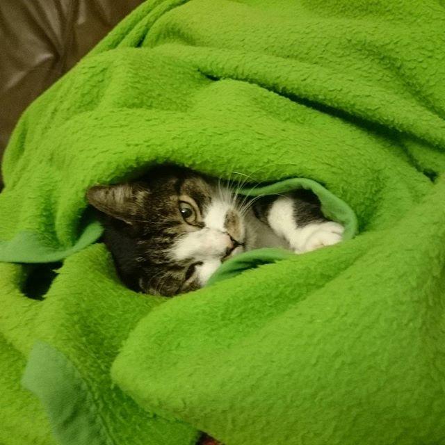 Katze eingepackt