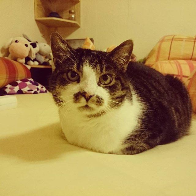 Hovercat =^.^=