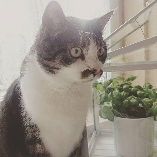 Sein Gesichtsausdruck, wenn er den Staubsauger hört!