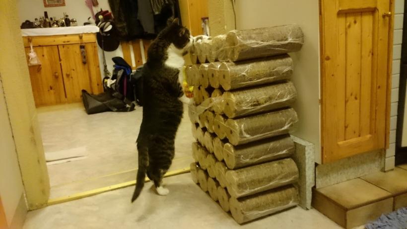 Katerchen im Training: Wir verstecken immer wieder mal Leckerlies im Holz und er muss sie suchen.